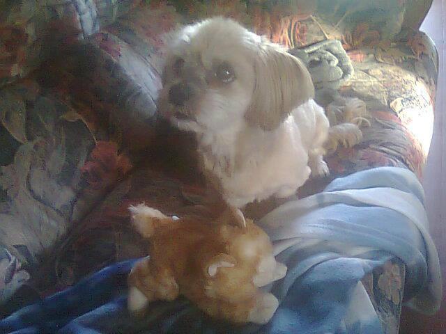 l'amour des animaux 10984710