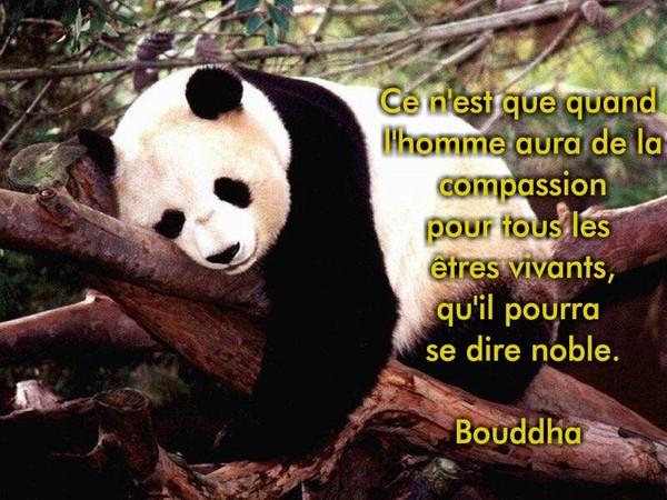 citations de bouddha, que j'aime beaucoup  Bcdb5a10