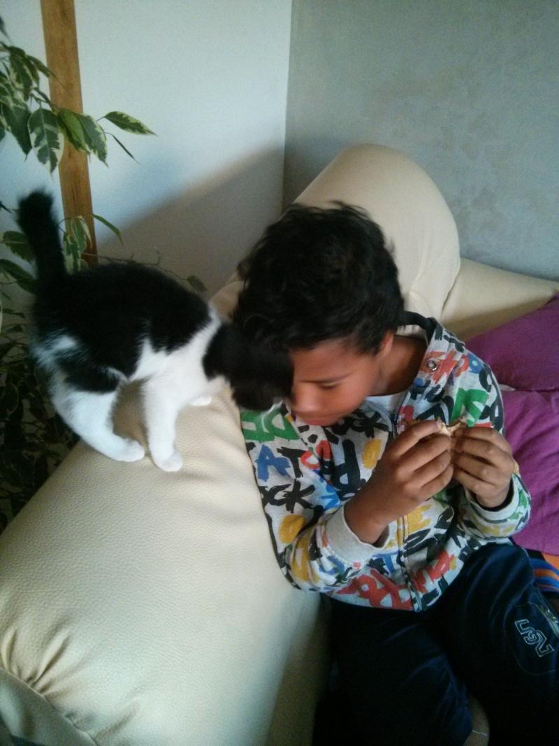 Joël, chaton type européen noir et blanc, né le 25/06/2014  2014-034