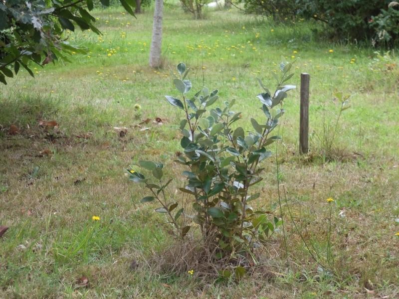 Vues du jardin Dsc00327