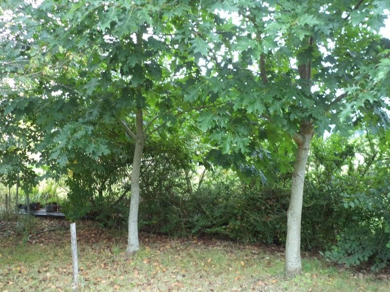 Vues du jardin Dsc00329