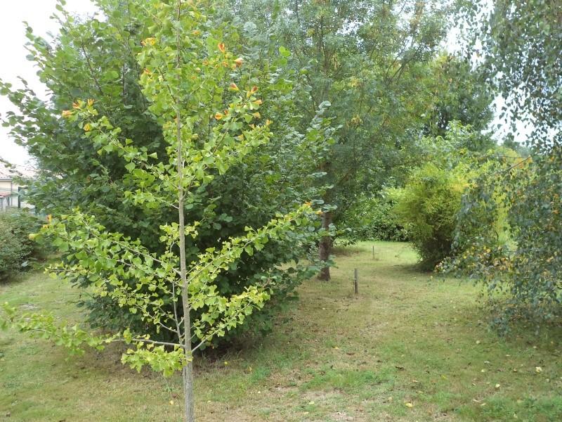 Vues du jardin Dsc00330