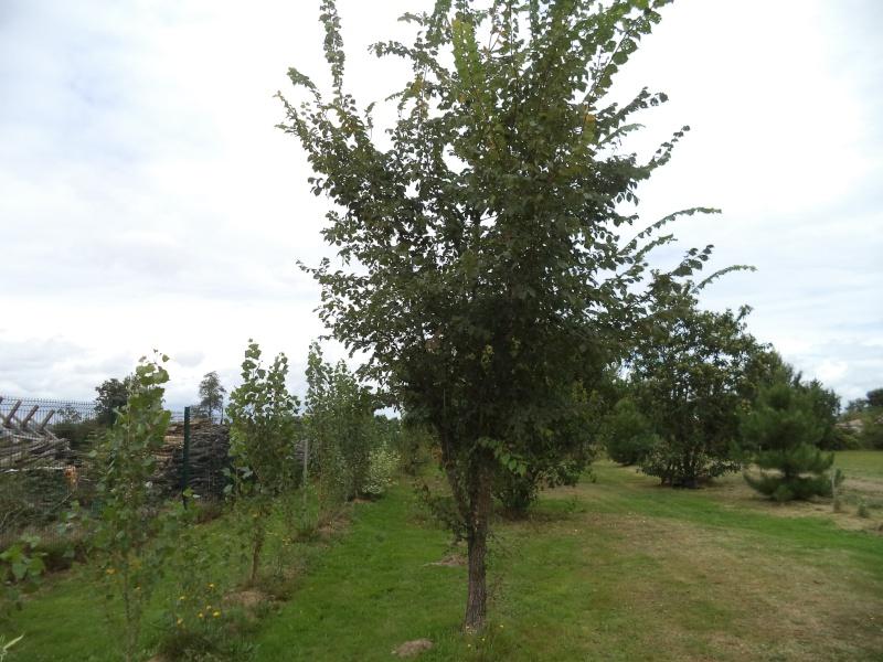 Vues du jardin Dsc00335