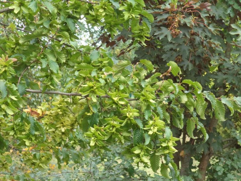 Vues du jardin Dsc00336
