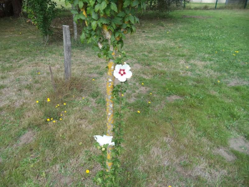 Vues du jardin Dsc00337