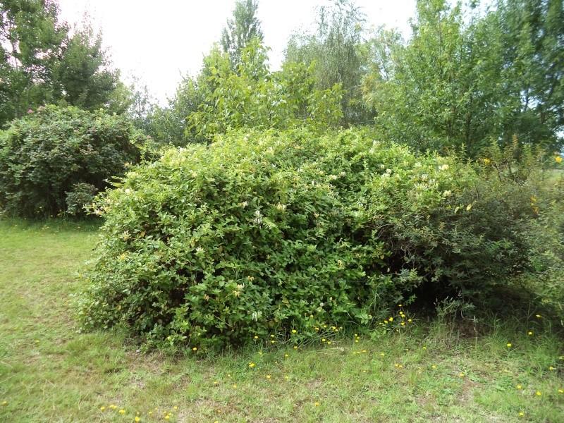 Vues du jardin Dsc00340