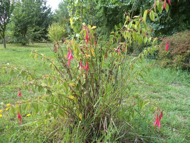 Vues du jardin Dsc00341