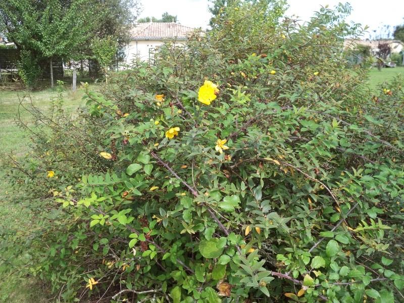 Vues du jardin Dsc00342