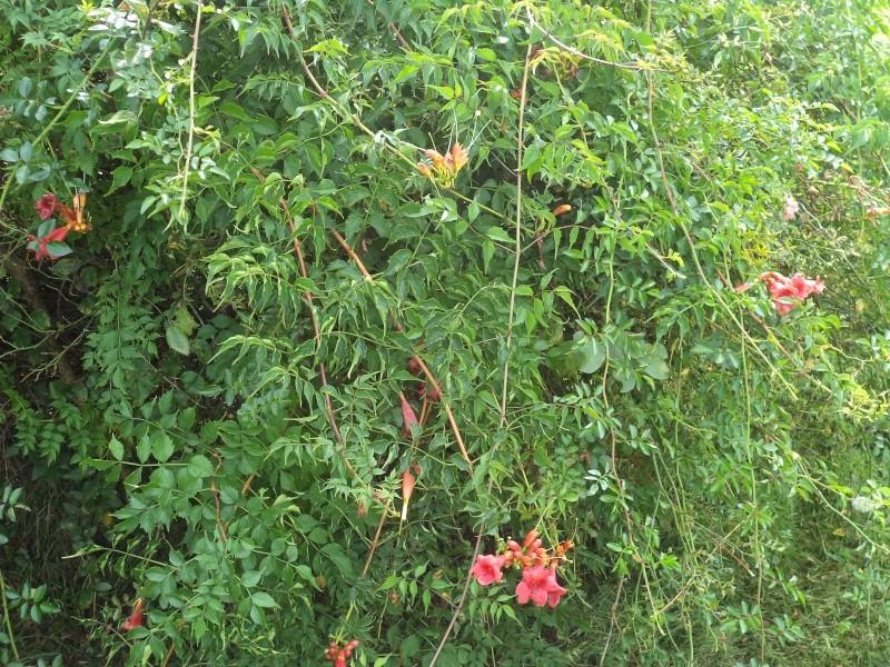 Vues du jardin Dsc00343