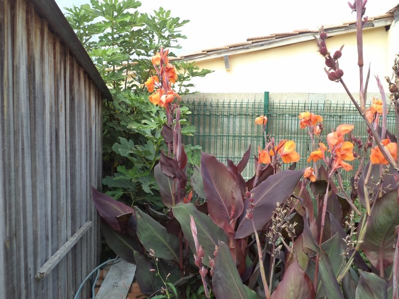 Vues du jardin Dsc00344