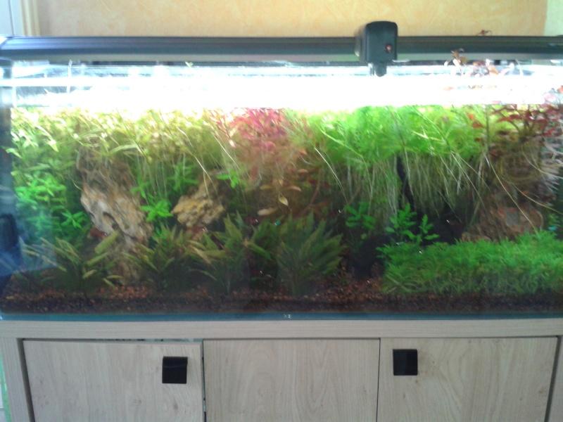 240 litres très planté  (j 'ai des algues) - Page 7 2014-010