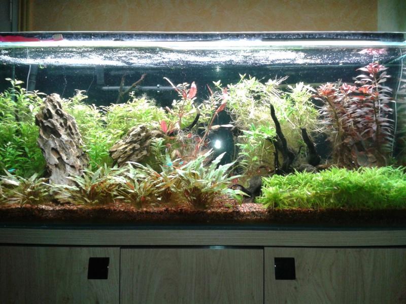 240 litres très planté  (j 'ai des algues) - Page 7 2014-011