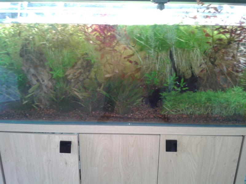 240 litres très planté  (j 'ai des algues) - Page 7 2014-014