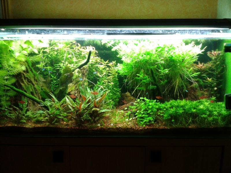 240 litres très planté  (j 'ai des algues) - Page 8 2014-117