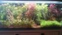 Mes (plus) de 60 plantes dans mon 240 litres - Page 5 Dsc_0016