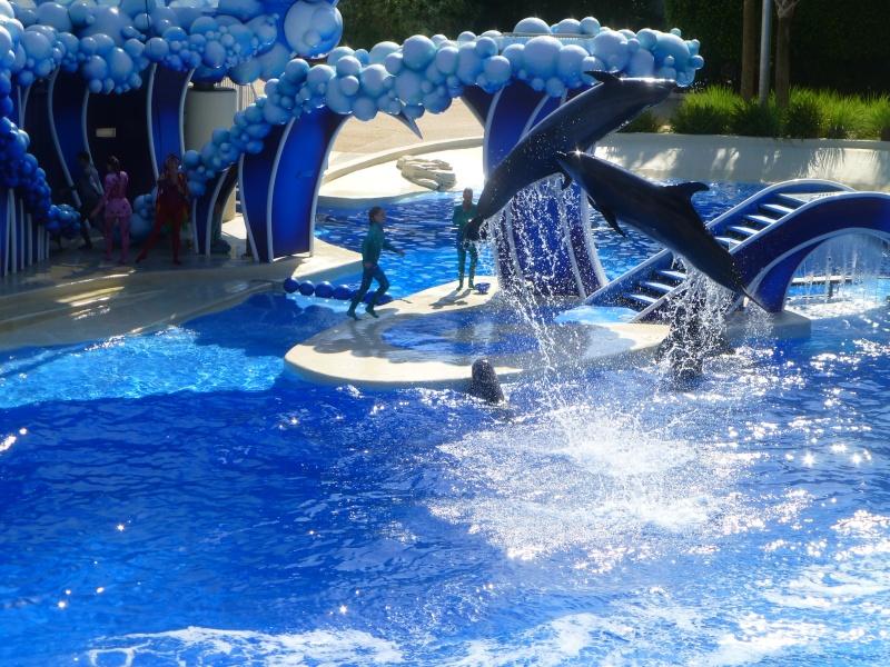 TR terminé: Universal Orlando et Seaworld ou un rêve devenu réalité! P1130113
