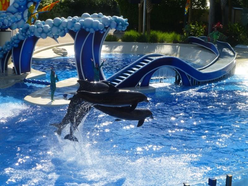 TR terminé: Universal Orlando et Seaworld ou un rêve devenu réalité! P1130115