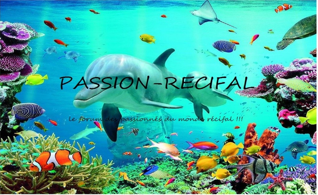 passion-recifal
