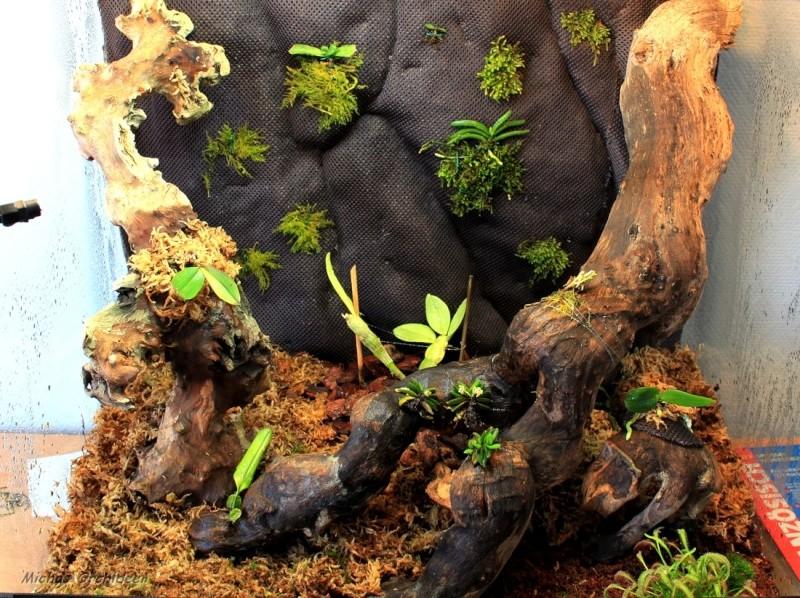 Ein Terrarium als Orchidarium Orchid15