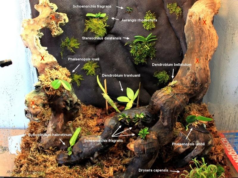 Ein Terrarium als Orchidarium Orchid16