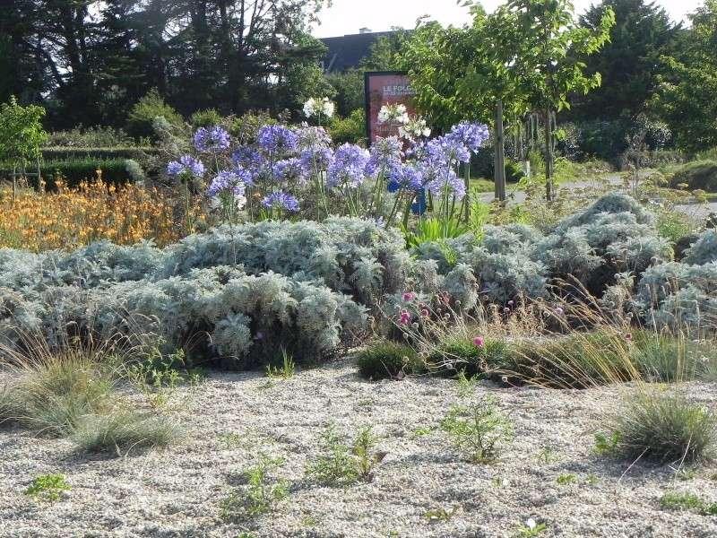 massifs en bleu - fleurs bleues et belles associations Dscn6143