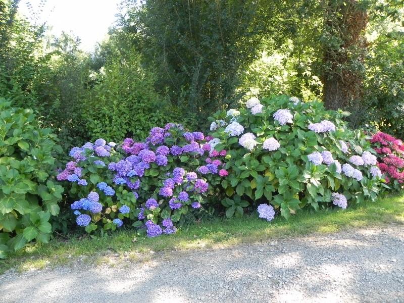 massifs en bleu - fleurs bleues et belles associations Dscn6147