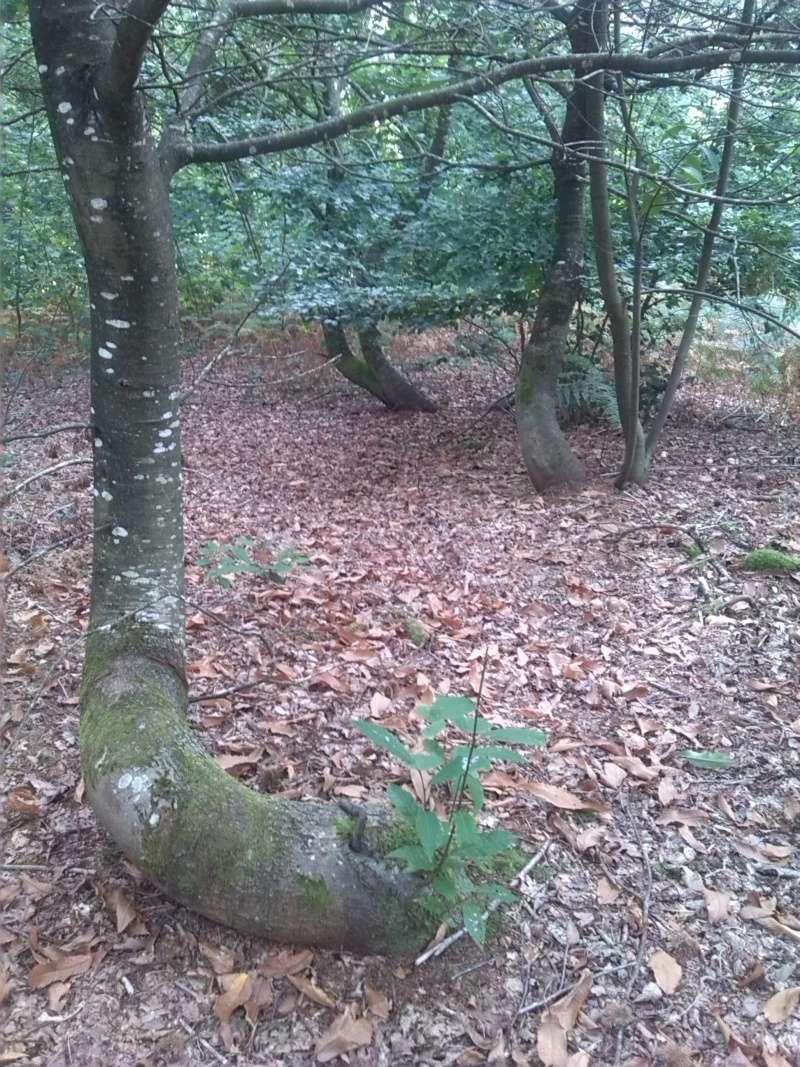 Etreindre des arbres est bon pour la santé Arbres12