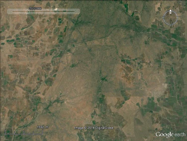 Lions en Inde, Gir Forest, Gujarat - Inde Lionin10