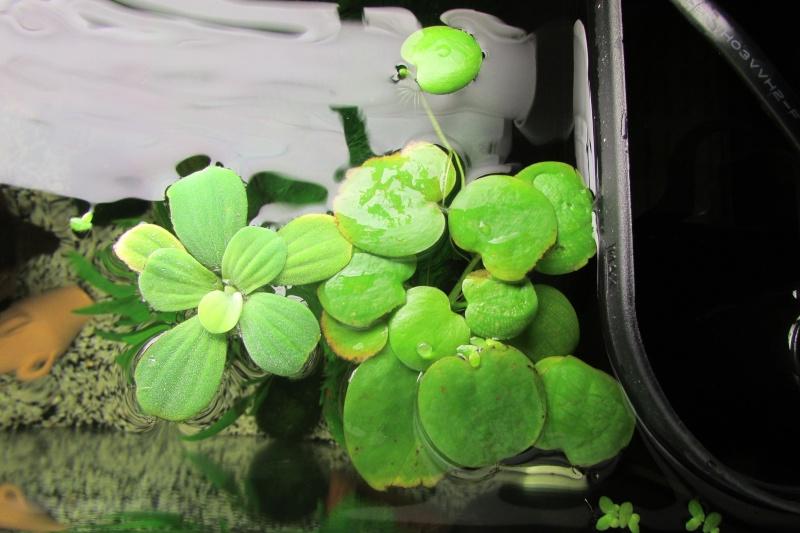 L'aquarium de Protector Espece10