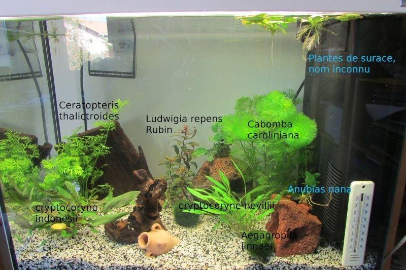 L'aquarium de Protector Plante10
