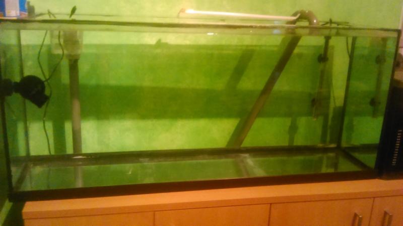 mon nouveau bac 250 litres eau de mer Dsc_0014