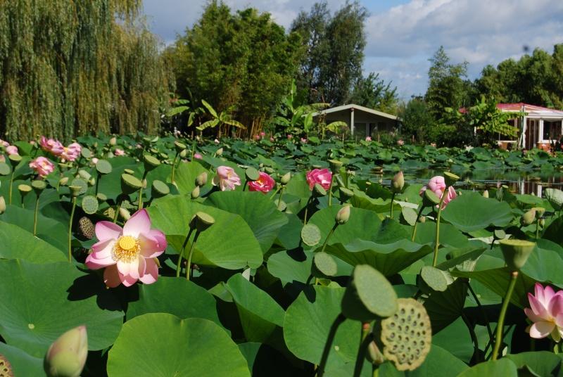 (85) Parc floral et tropical de la Court d'Aron - Saint-Cyr-en-Talmondais Dsc_4710