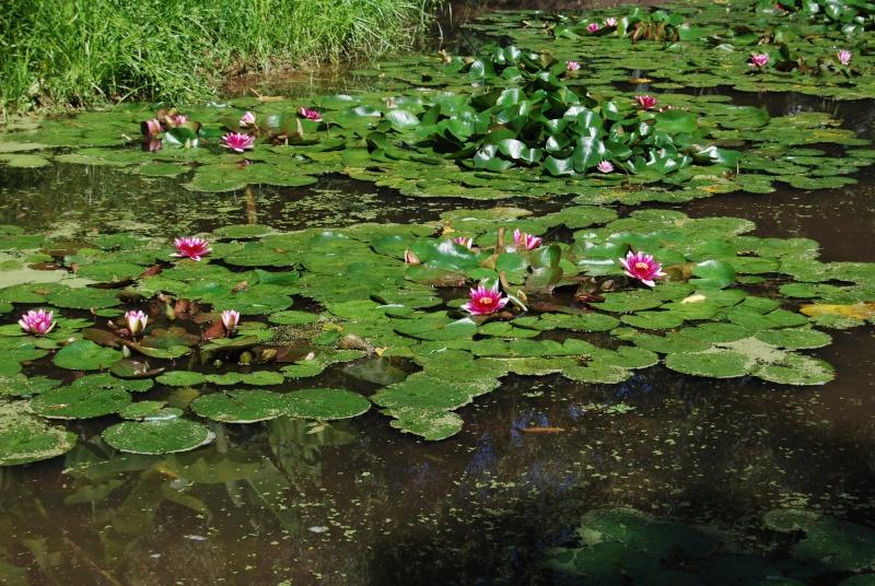 (85) Parc floral et tropical de la Court d'Aron - Saint-Cyr-en-Talmondais Dsc_4711