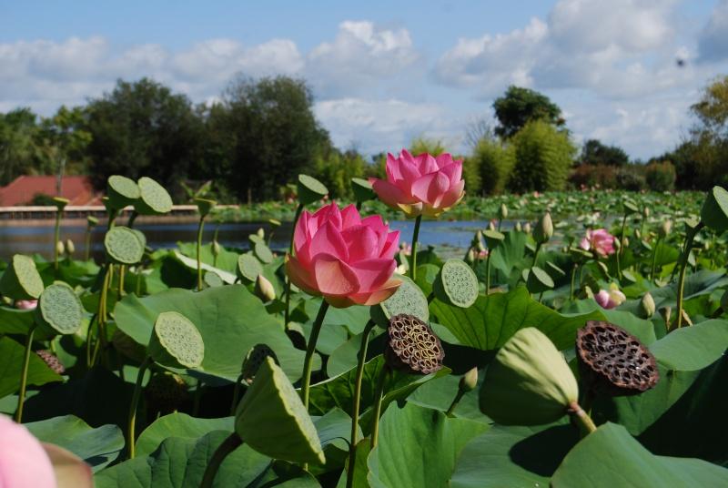 (85) Parc floral et tropical de la Court d'Aron - Saint-Cyr-en-Talmondais Dsc_4815