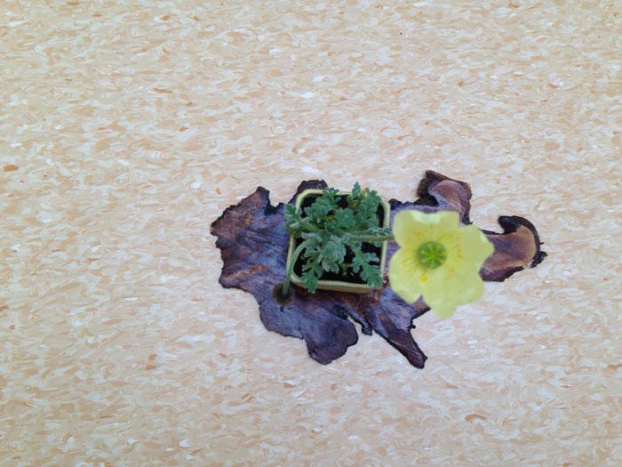 New Poppy 2014 Poppy-11