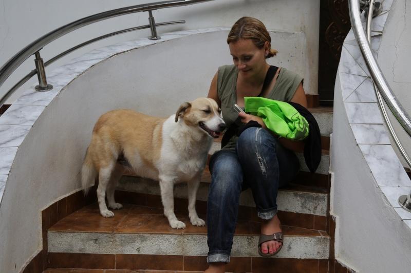 Murmurica, sauvetage de Sanda, chienne née en 2011 Murmur10