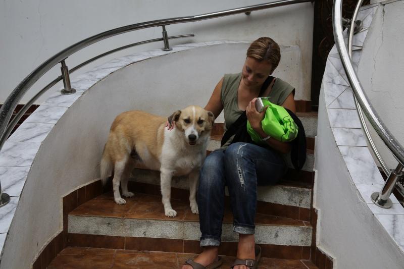 Murmurica, sauvetage de Sanda, chienne née en 2011 Murmur11