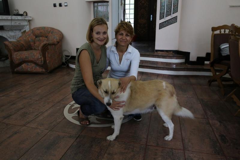 Murmurica, sauvetage de Sanda, chienne née en 2011 Sanda211