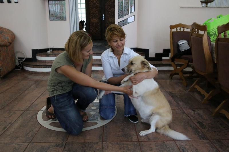 Murmurica, sauvetage de Sanda, chienne née en 2011 Sanda310