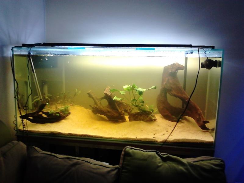 [résolu]Un grand bac et des petits poissons : taeniacara candidis - Page 3 Dsc_0010