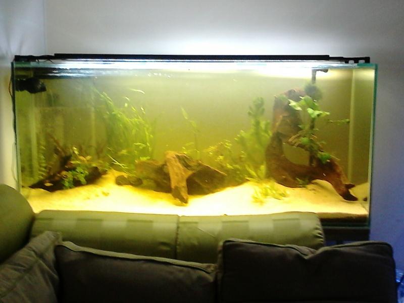 [résolu]Un grand bac et des petits poissons : taeniacara candidis - Page 3 Dsc_0015