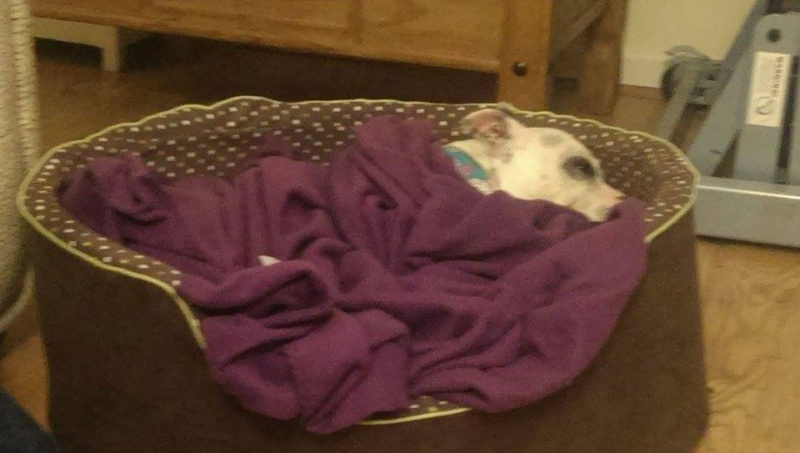 Winston 12 years needs a home in Kennels Worcestershire Winsto13