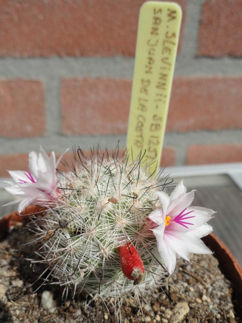 today in flower Dsc01710