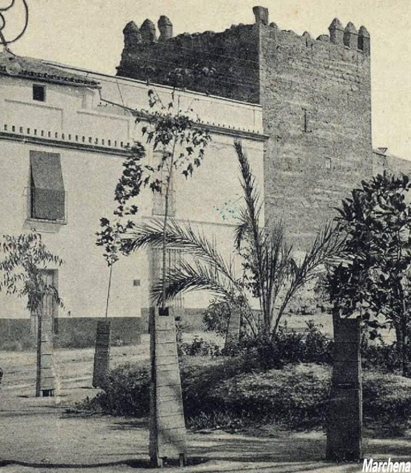 Incidencias en algunas palmeras de la Plaza Alvarado 1palme11