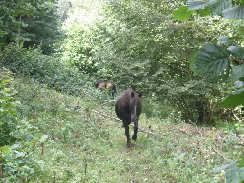 HAVANE - OI poney  née en 1995 - adoptée en mars 2014 par dona carlota P8050210