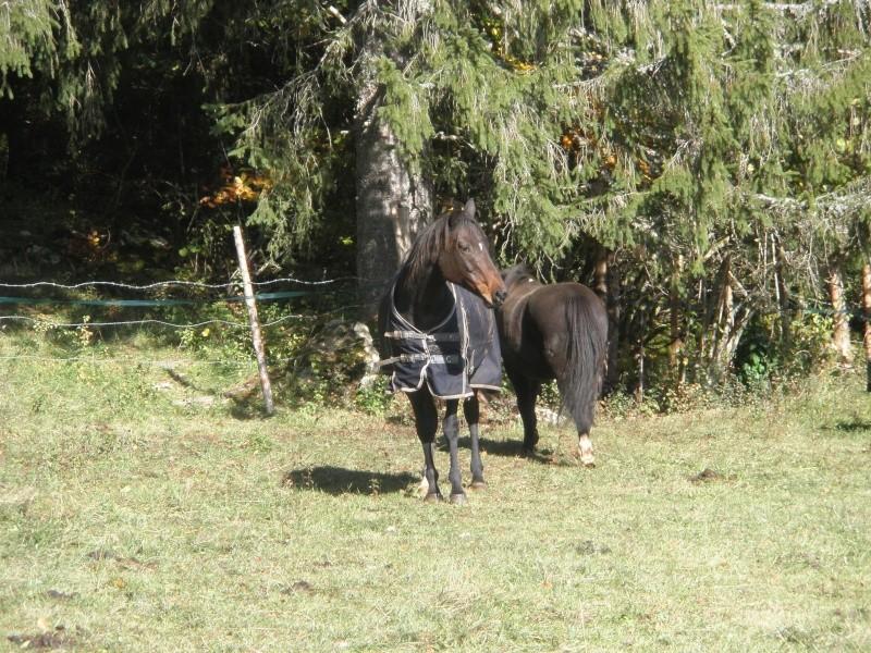 HAVANE - OI poney  née en 1995 - adoptée en mars 2014 par dona carlota Pa230013
