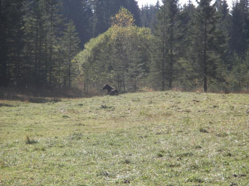 HAVANE - OI poney  née en 1995 - adoptée en mars 2014 par dona carlota Pa230015