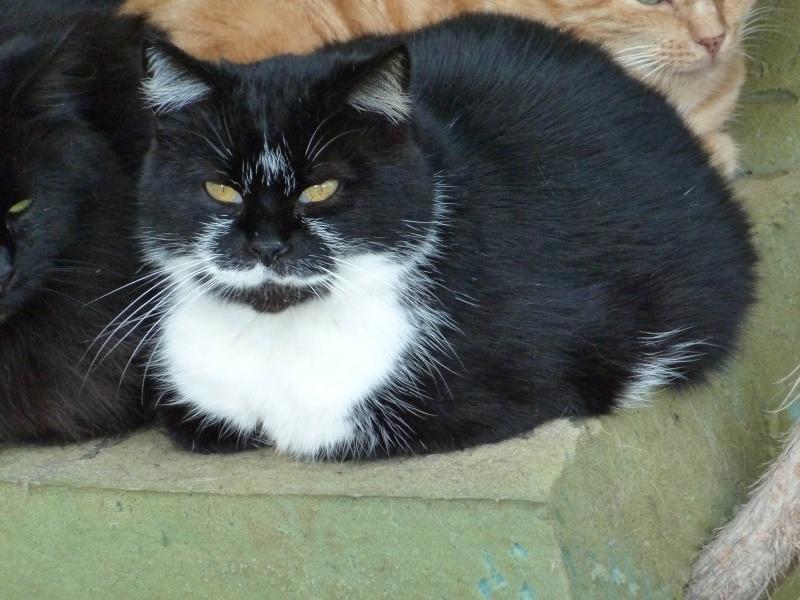 Mikette femelle noire et blanche, née en 2007 (59) Mikett11