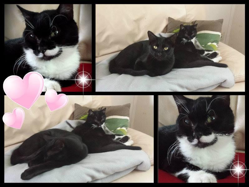 Jipsy, femelle, 2012, noire et blanche 10471310