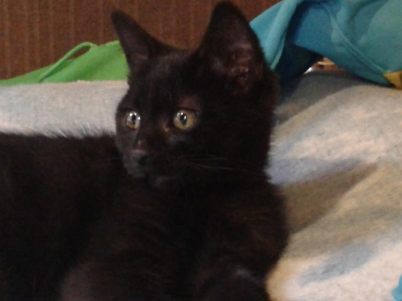 Réglisse, bébé de Juno alias Oursonne 20140516